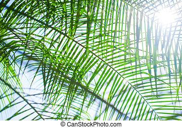 foglie palmo, fondo