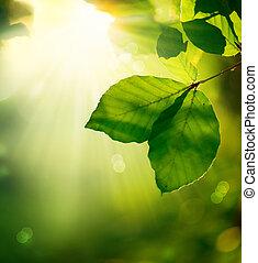 foglie, raggi sole, verde, fondo., natura