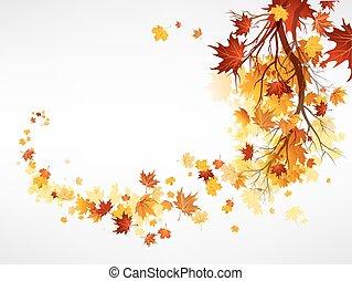 foglie, ramo, acero