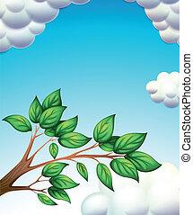 foglie, ramo albero