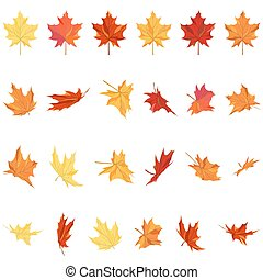 foglie, set, acero