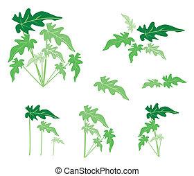foglie, set, fondo, philodendron, bianco