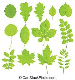 foglie, set, isolato, albero, bianco