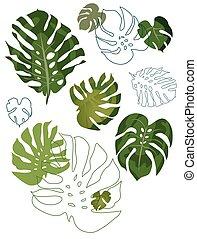 foglie, set, philodendron