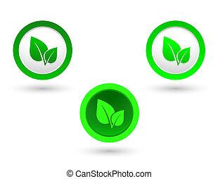 foglie, set, verde
