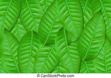 foglie, sfondo verde