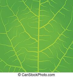 foglie tè, sfondo verde, bianco, fresco