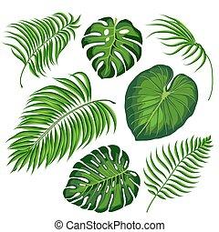 foglie, tropicale, piante