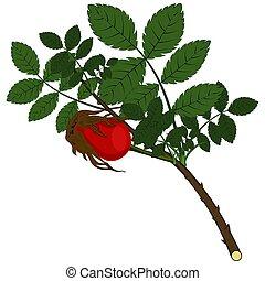 foglie, verde, rosehip, ramo
