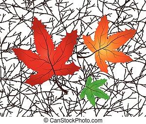 foglie, vettore, ramo, illustrazione, acero