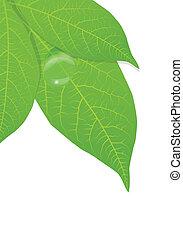 foglie, vettore, sfondo verde