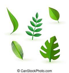 foglie, vettore, verde, set, icona