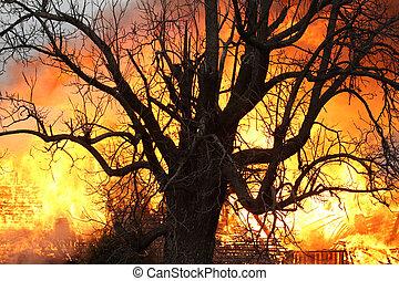 fogo, além, a, antigas, árvore carvalho