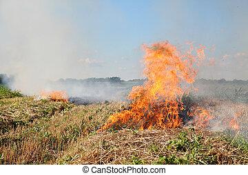 fogo, em, campo