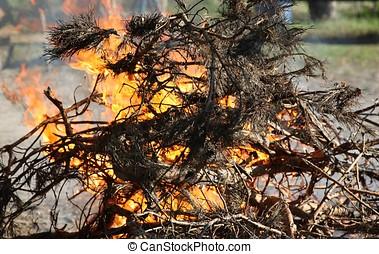 fogo, força, de, natureza