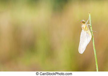 fogo, libélula