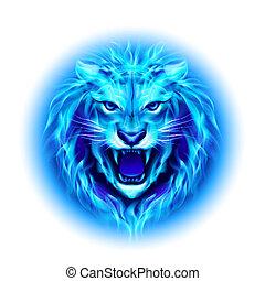fogo, lion., cabeça
