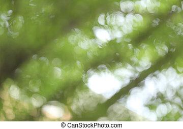 Fokus, Abstrakt, grün, hintergrund, heraus
