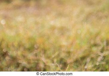 Fokus, tropische, Feld, grün, gras, heraus