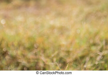 fokus, tropische , grünes gras, feld
