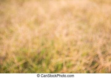 fokus, tropische , trocken, gras, field.