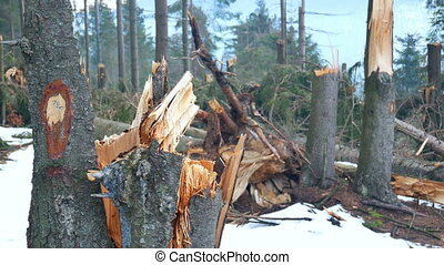 Folded trees problem forest - Folded trees on the ground.The...