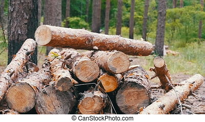 Folding logs felled into a heap. Felled Tree Trunks in the...