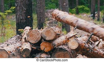 Folding logs felled into a heap. Felled Tree Trunks in the...