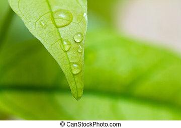 folha, água, experiência verde, branca, gotas
