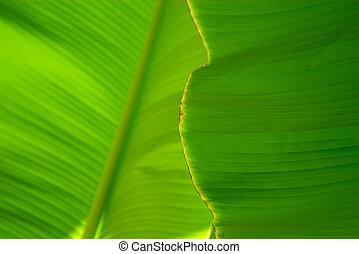 folha, árvore palma