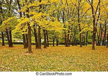 folha, árvore, zealand., histórico, amarela, cidade, novo, arrowtown
