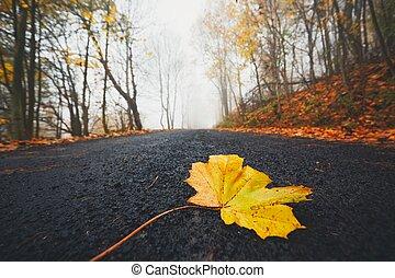 folha caída, estrada