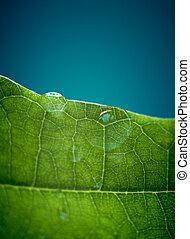 folha, dof., raso, carvalho, água, drops., verde