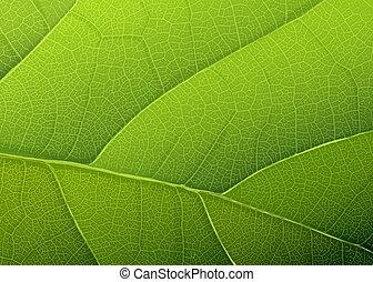 folha, fundo, vetorial, verde, eps10, texture.