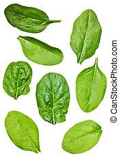folha, isolado, espinafre