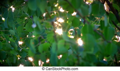 folha, luz solar, raio, 4k