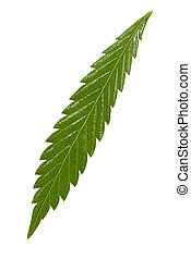 folha, marijuana