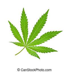 folha, marijuana, isolado