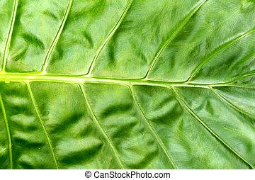 folha, natureza, primavera, folhas, tropicais, experiência., verde, selva