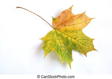 folha outono