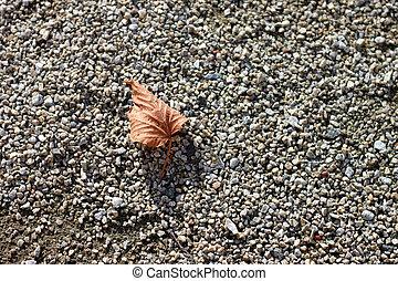 folha outono, chão