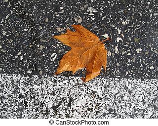 folha outono, estrada