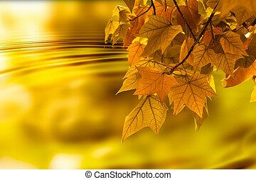 folha outono, fundo