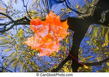 folha outono, ligado, a, água