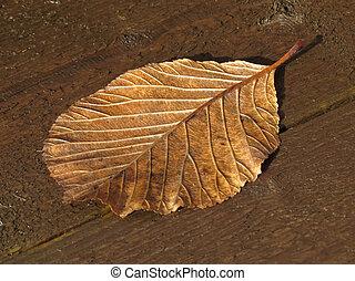 folha, outono, outono