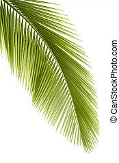 folha palma