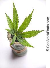 folha, rolado, dólares, cannabis, americano, fundo, branca