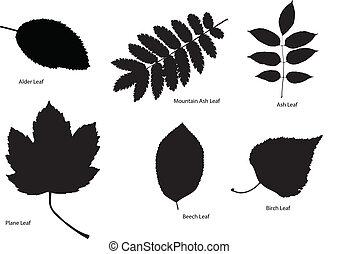 folha, silhuetas, árvore