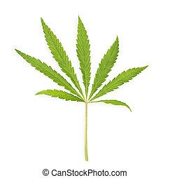 folha, sobre, marijuana, isolado, cannabis, fundo, branca