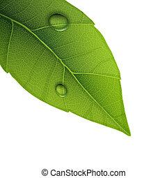 folha verde, com, água, gotas, closeup, vetorial, illustration.